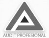 AUDIT PROFESIONAL